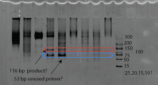 oligopaint_PCR3