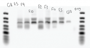 BogdanBXCetal_PCR