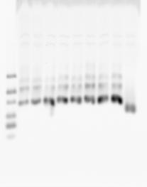 PCRforMultiColor3