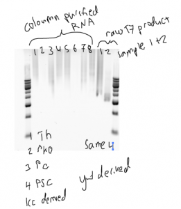 annotated_dsRNA_failure