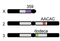 DrosophilaRptLocations