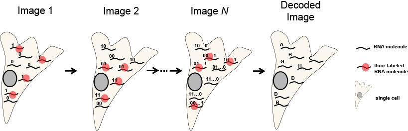 merfish-schematic
