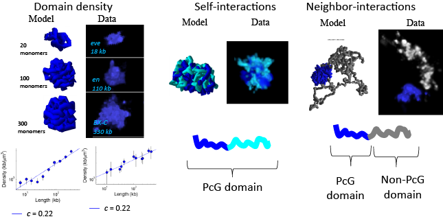 3d-genome-modeling